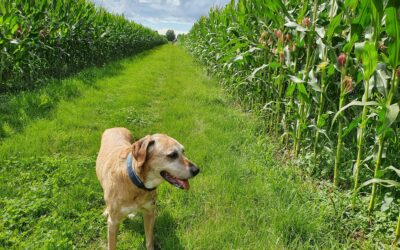 Coach-Your-Dog macht Urlaub